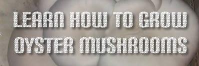Funguys - Lear how to grow mushrooms